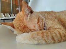 Gatto sonnolento nella sedia fotografie stock