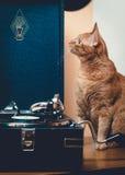 Gatto sorpreso che si siede vicino al grammofono Fotografie Stock Libere da Diritti