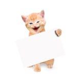 Gatto sorridente con l'insegna isolata Immagini Stock