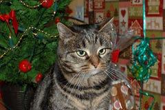 Gatto sotto l'albero di Natale Immagine Stock Libera da Diritti