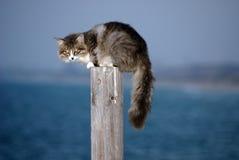 Gatto spaventato Fotografia Stock Libera da Diritti