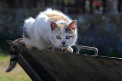Gatto spaventato della via Fotografia Stock Libera da Diritti