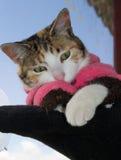 Gatto a strisce che guarda giù Fotografia Stock
