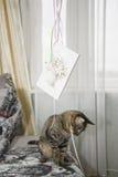 Gatto a strisce congratulato fotografie stock