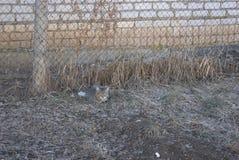 Gatto a strisce grigio che si trova sull'erba Fotografia Stock