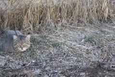 Gatto a strisce grigio che si trova sull'erba Immagini Stock