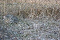 Gatto a strisce grigio che si trova sull'erba Immagine Stock Libera da Diritti