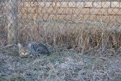 Gatto a strisce grigio che si trova sull'erba Fotografie Stock Libere da Diritti