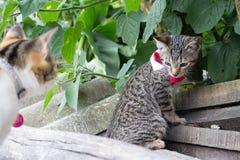Gatto a strisce grigio nella natura Immagine Stock