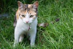 Gatto a strisce grigio nella natura Fotografia Stock Libera da Diritti