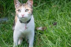 Gatto a strisce grigio nella natura Immagini Stock Libere da Diritti