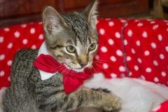 Gatto a strisce nel letto Fotografie Stock