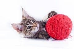 Gatto su bianco, gattino, palla sveglia e lanuginosa Fotografia Stock Libera da Diritti