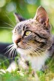 Gatto su erba verde Fotografia Stock