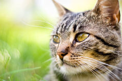 Gatto su priorità bassa verde Fotografie Stock