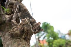 Gatto su un albero fotografie stock