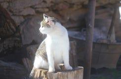Gatto su un albero del tronco Fotografie Stock Libere da Diritti