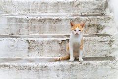 Gatto su un colore rosso Immagini Stock