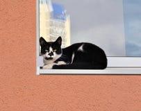 Gatto su un davanzale della finestra nella città Immagini Stock