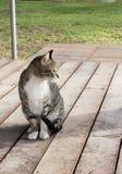 Gatto su un portico Fotografia Stock Libera da Diritti