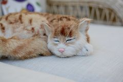 Gatto su un sofà Fotografia Stock