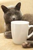 Gatto su un sofà con la tazza bianca Fotografia Stock
