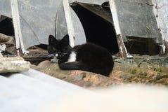 Gatto su un tetto Fotografia Stock