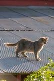 Gatto su un tetto caldo dello stagno Immagini Stock Libere da Diritti
