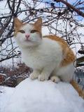 Gatto su una palla della neve fotografia stock