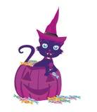Gatto su una zucca di Halloween Fotografia Stock