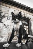 Gatto sui graffiti della via e dell'automobile su vecchio effetto di lerciume della parete Immagini Stock Libere da Diritti