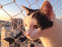 Gatto sul balcone al tramonto immagini stock libere da diritti