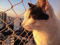 Gatto sul balcone al tramonto fotografia stock