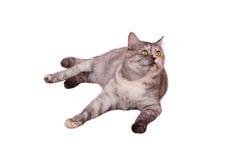 Gatto sul bianco Immagini Stock