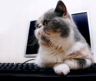 Gatto sul calcolatore Fotografia Stock