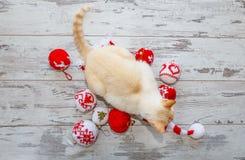 Gatto sul cappuccio e sulle palle di Natale Immagini Stock