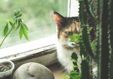 Gatto sul davanzale, sulla pianta della canapa e sul cactus fotografia stock libera da diritti