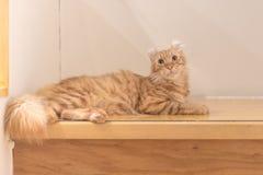 Gatto sul pavimento di legno fotografia stock