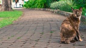 Gatto sul percorso della passeggiata in parco Fotografie Stock Libere da Diritti