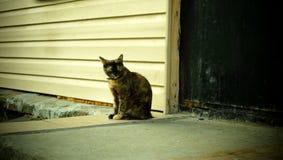 Gatto sul portico immagine stock