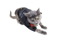 Gatto sul prowl Immagine Stock