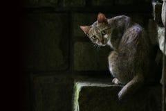 Gatto sul punto di pietra Immagine Stock