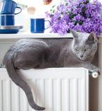 Gatto sul radiatore Fotografia Stock