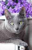 Gatto sul radiatore Fotografie Stock Libere da Diritti