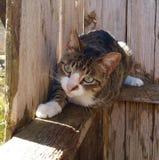Gatto sul recinto Fotografia Stock