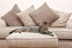 Gatto sul sofà Immagini Stock Libere da Diritti