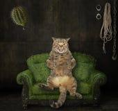 Gatto sul sofà spinoso illustrazione vettoriale