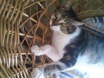 Gatto sul sole in una sedia di vimini fotografia stock