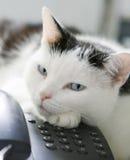 Gatto sul telefono! Immagine Stock Libera da Diritti
