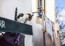 Gatto sul tetto Fotografia Stock